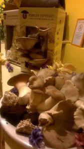 I funghi coltivati nel fondo del caffè
